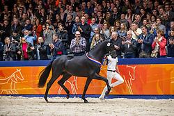 317, Le Formidable<br /> KWPN Hengstenkeuring - 's Hertogenbosch 2019<br /> © Hippo Foto - Dirk Caremans<br /> 02/02/2019