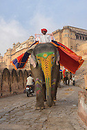 Elephant,Amber Fort, city of Jaipur,Rajasthan, India