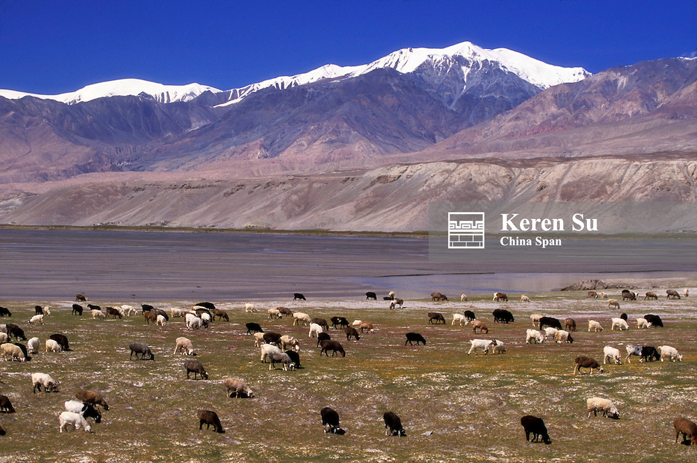 sheep grazing on the meadow on the Pamir Plateau, Xinjiang Province, Silk Road, China