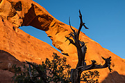 Sunset shines on the red-orange sandstone of Skyline Arch at Devils Garden Campground, Arches National Park, Moab, Utah, USA. A thick underground salt bed underlies the creation of the park's many arches, spires, balanced rocks, sandstone fins, and eroded monoliths. Some 300 million years ago, a sea flowed into the area and eventually evaporated to create the salt bed up to thousands of feet thick. Over millions of years, the salt bed was covered with debris eroded from the Uncompahgre Uplift to the northeast. During the Early Jurassic (about 210 million years ago) desert conditions deposited the vast Navajo Sandstone. On top of that, about 140 million years ago, the Entrada Sandstone was deposited from stream and windblown sediments. Later, over 5000 feet (1500 m) of younger sediments were deposited and then mostly worn away, leaving the park's arches eroded mostly within the Entrada formation.