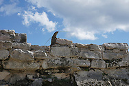 Viaggio in Messico, Tulum rovine Maya, Costa Maya, 16 Novembre 2016 © foto Daniele Mosna