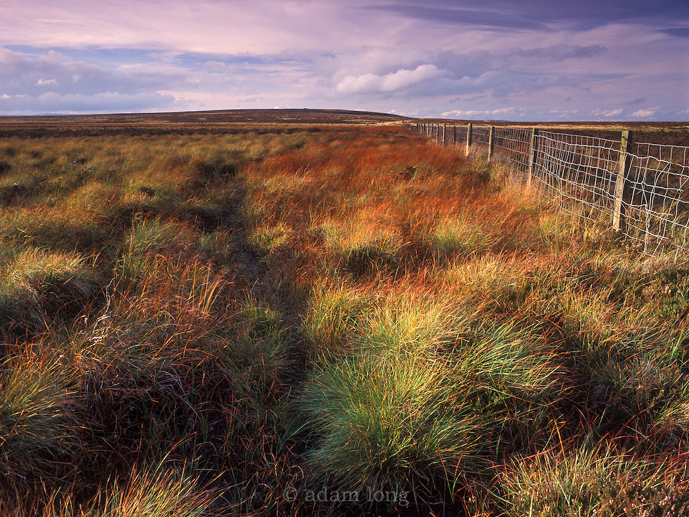 The much studied peat bog of Ringinglow  near Sheffield.