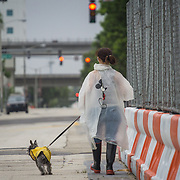 SEPTEMBER 9, 2017--MIAMI--FLORIDA<br /> Paula Jimenez walks her dog Rocco back to her condo after taking him to a dog park in downtown Miami Saturday morning. Jimenez went to a shelter as she lives in an evacuation zone but returned home.<br /> (Photo by Angel Valentin)