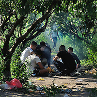 Syrian refugees cooking maize scavenged from nearby fields in the shade of trees not far from the Hungarian frontier. Refugees continue to arrive in large numbers, crossing the border from Serbia into Hungary along an old railway line, through a gap in the new border fence. . There is some degree of fear amongst the refugees, about fingerprinting by Hungarian authorities, leading some refugees to return to Serbia,  and a number wait on that side of the border for nightfall in the hope of then passing through unseen.