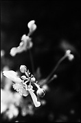 Black &amp; White Silver Gelatin Fibre Print<br /> Signed Limited Edition Original