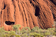 Trees at the base of Ayers Rock, Uluru, Australia