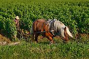 Les Chaumes. Vosne-Romanee, Burgundy, France