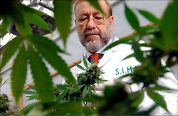 ROTTERDAM, NETHERLANDS - SEPT-10-2003 - James Burton co-founder of S.I.M.M. is one of the official Cannabis growers for the Dutch government. The Netherlands has legalized cannabis for medical use and has made the drug available at local pharmacies with a doctors prescription. The government has enlisted official growers so the quality and potency can be strictly monitored. Patients suffering from diseases such as Multiple Sclerosis, Cancer, AIDS, and Glaucoma, to name a few, can obtain a doctors prescription for the drug. (Photo © Jock Fistick)