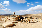 Israel, Negev Desert, Bedouin Shepherd with herd of sheep waters his herd from the water well