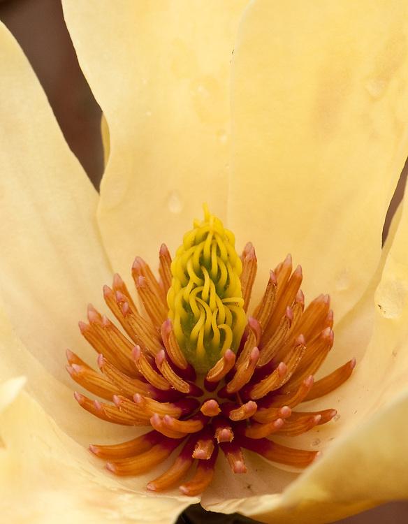 Magnolia Ablaze