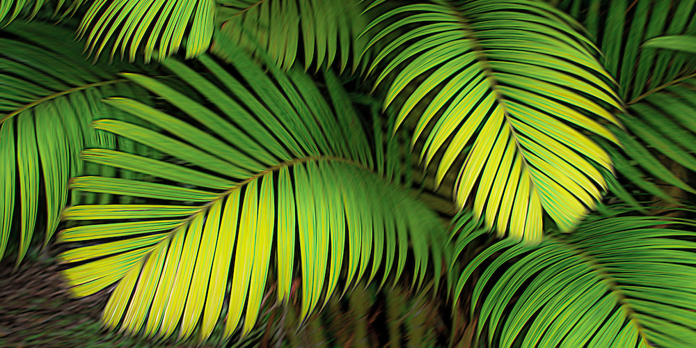 Tiger palm leaves form a colorful design