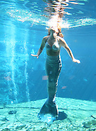 A mermaid bobs to the surface at Weeki Wachee Springs near Tampa, Florida.  The mermaid show is a living remnant of Florida's past.