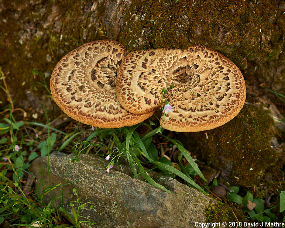 Tree Fungus. Image taken with a Leica CL camera and 23 mm f/2 lens.