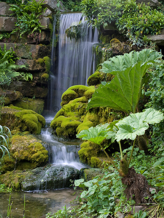 Gunnera manicata - Chilean rhubarb - by pool and waterfall, The Sunken Garden, Hampton Court, Herefordshire