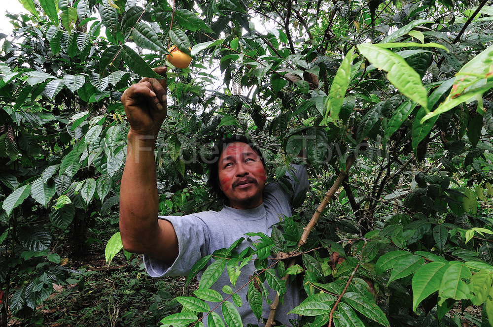 Nelson Mamallacta,belonging from eight generations of shamans,it's an amazonic quichua, the most numerous people of amazonic Ecuador. <br />