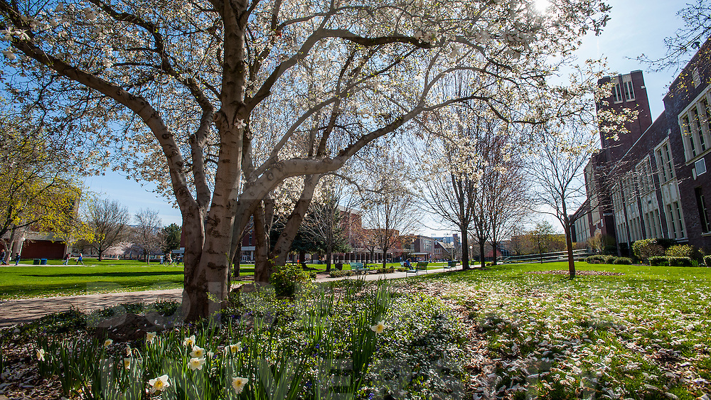 Spring Campus Scenes, flowers, blossoms, trees, landscape, Carrie Quinney photo