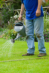 Using a watering can to apply liquid lawn feed