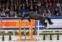 071, Hornette Du Mesnil<br /> KWPN hengstenkeuring - 's Hertogenbosch 2020<br /> © Hippo Foto - Dirk Caremans<br /> 29/01/2020