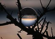 Crystal ball on a branch of a bush near a Jekyll Island beach at sunrise, sunset