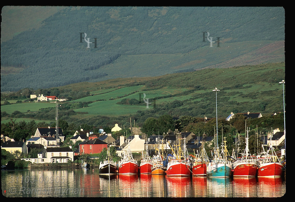 Fishing boats sit docked in a neat row on a September morn at Castletownbere, largest town and harbor on Beara Peninsula; Ireland.