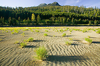 Tufts of grass and wind blown sand give the impression of a mini desert within the Elk River delta in Strathcona Park along the Gold River Hwy.  Strathcona Park, Vancouver Island, British Columbia, Canada.
