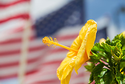 A Yellow Hibiscus Backed By The Stars and Stripes In Front Of The Pearl Harbor Memorial