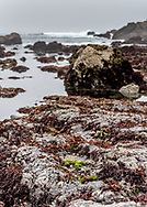 Tidepools on the Pacific in Mendocino County near Fort Bragg, California. Colorful seaweed grows from the exposed rocks as a wave breaks in the distance. Vertical photo.
