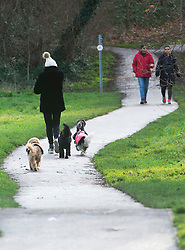 ©Licensed to London News Pictures 09/01/2020<br /> Sidcup ,UK A dog walker wearing a woolly hat and a winter coat to keep warm. Cold windy weather at Footscray Meadows in Sidcup, South East London. Photo credit: Grant Falvey/LNP