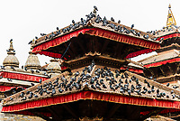 Pigeons on rooftops, Durbar Square, Kathmandu, Nepal.
