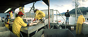 Processing halibut, Seward Alaska