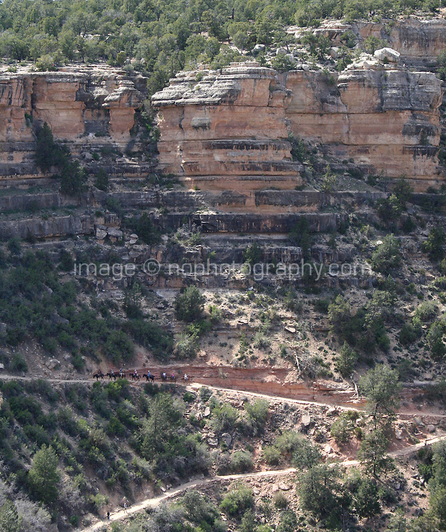 Mules trecking up the side of The Grand Canyon at the South Rim in Arizona USA. One of the Seven Natural Wonders of the World, the canyon was created by the Colorado River millions of years ago. The canyon is 277 river miles long, up to 18 miles wide and a mile deep.