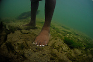 Feet of an indigenous Kuna Indian viewed underwater in a river stream