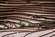 Rice fields being prepared near Menghan in Xishaungbanna, China.