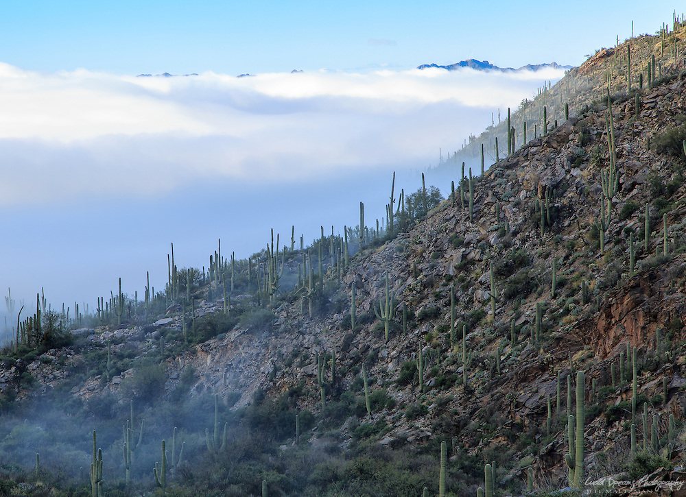 Dense fog rolls into Pima Canyon, nearly fully obscuring the Tucson Mountains in the distance.