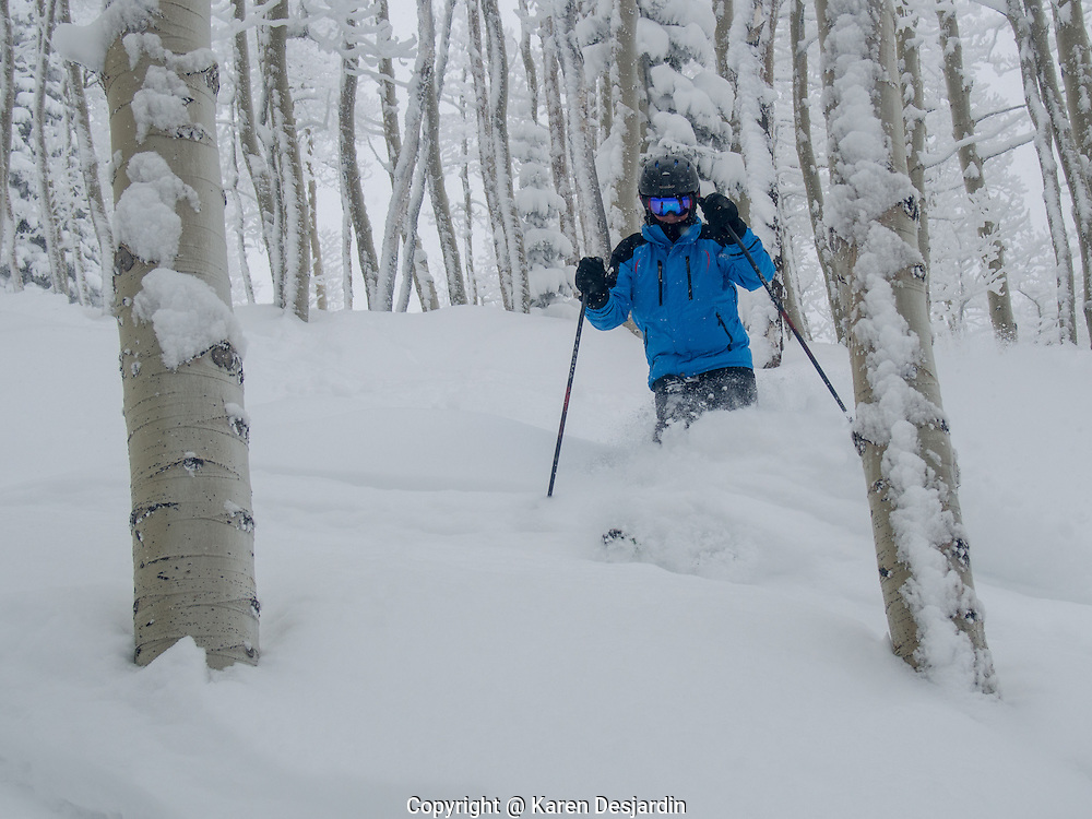 Man skiing through fresh powder snow in the trees, Steamboat Springs, CO.