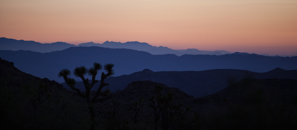 Joshua Tree cacti are silhouetted at sunrise in Joshua Tree National Park