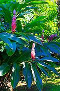 Flower, Fiji
