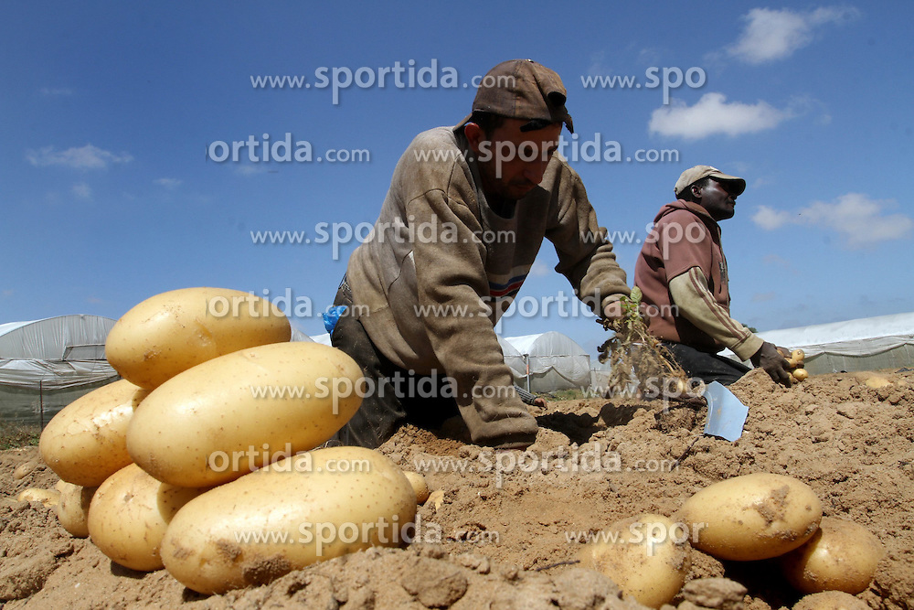 30.04.2015, Rafah, PSE, Kartoffel Ernte in Pal&auml;stina, im Bild Bauern und Arbeiter bei der Kartoffel Ernte auf einem Feld // Palestinian farmers harvest the potatoes crop, in Rafah in the southern Gaza strip, Palestine on 2015/04/30. EXPA Pictures &copy; 2015, PhotoCredit: EXPA/ APAimages/ Abed Rahim Khatib<br /> <br /> *****ATTENTION - for AUT, GER, SUI, ITA, POL, CRO, SRB only*****