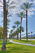 Rows of Palm Trees, Cloudy, Blue, Sky,  winding sidewalk, Palm Desert, California, United States, Coachella Valley, east of Palm Springs,