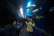 Oceanarium at entertainment center Duman. Water tunnel.