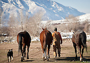Reynaldo Yucra moves some of the horses at the ACE Land and Livestock sheep farm outside Morgan, Tuesday, Nov. 13, 2012.