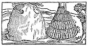 Charcoal burning: Building pyramid of wood (right) to be covered with bracken and earth, then slowly burned (left) to produce charcoal. Superior to charcoal produced in pits. From Biringuccio 'De la Pirotechnia' Venice 1540. Woodcut.