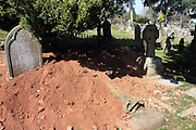 Apr 16, 2010 - Devon, United Kingdom - <br /> <br /> The Grave Robbers Of Sidmouth Are Unearthed: Family Of Badgers Sets Up Home Underneath Cemetery<br /> <br /> Concerned locals thought tomb raiders had hit a seaside cemetery after graves there were completely excavated.<br /> But on closer inspection, they realised the culprits were not ghoulish visitors but a family of badgers who had set up home underneath three 100-year-old graves, unearthing the human remains.Council staff in Sidmouth, Devon, have re-buried the bones in ground directly beneath where they were uncovered. Graves disturbed include one of a John William Hayes, aged 24, who died in 1899. Others belong to John and Emily Lake, who died in 1912 and 1935, respectively, and James Orchard, who died in 1914. 'From a practical point of view, it was necessary to put the bones out of public view, so they have been covered with soil, pending a decision on whether the grave needs to be re-consecrated,' said a spokesman for East Devon District Council. 'Due to the presence of the badgers and the amount of digging they do, it is always possible that more bones could be uncovered at any time. This will be an ongoing risk until such time as the badgers move to another location.' A Natural England representative and Department of Environment badger expert lan Crowe visited Sidmouth Cemetery and will make recommendations about how the badgers should be managed 'in a sensitive, humane and legal way'. Photo Shows: The scene of destruction at the cemetery in Sidmouth, Devon, where a family of badgers has moved in<br /> ©Exclusivepix