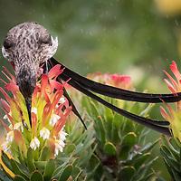 Perching Birds, Part 2