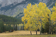 Fall color, Banff National Park Alberta