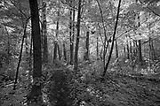 Forest landscape<br />Parc national du Fjord-du-Saguenay<br />Quebec<br />Canada