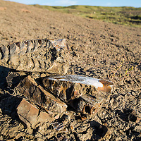 montana prairie gives up an ancient fossil