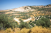 Hiking in Yarmouk Nature Reserve with its decidious oak trees along the borders of Israel, Syria, and Palestine.