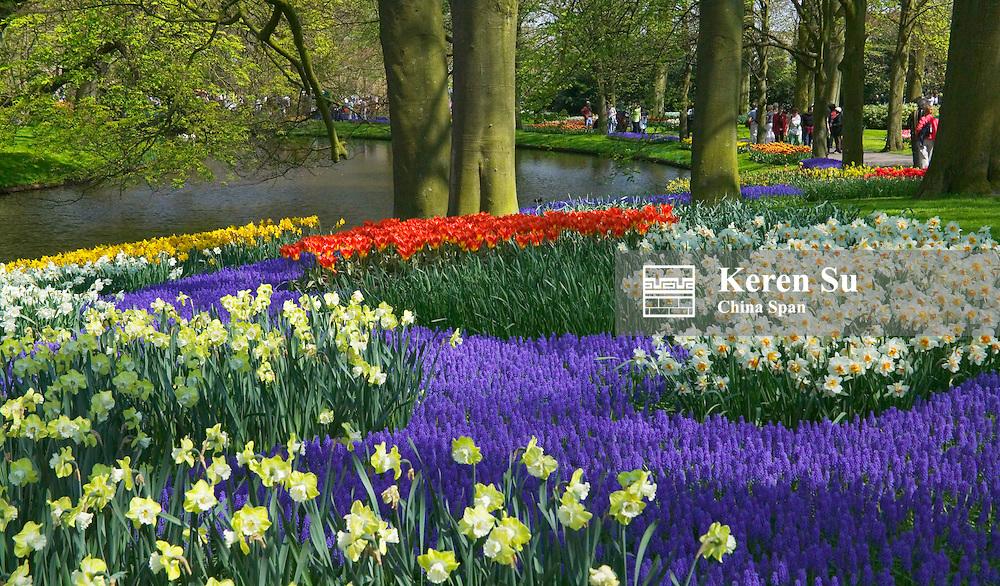 Tulips in Keukenhof Gardens, Amsterdam, Netherlands