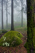 Near the area known as Peninha, in the Sintra Range, fog is quite common, surrounding the trees completely.